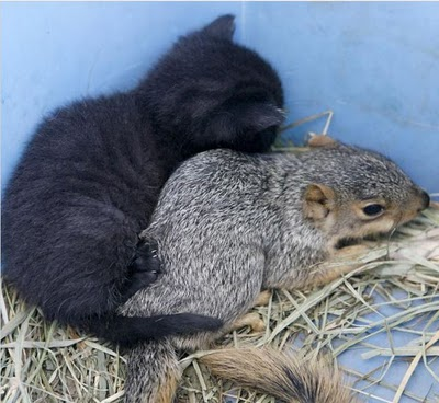cats_and_squirrel_01.jpg