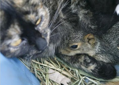 cats_and_squirrel_06.jpg